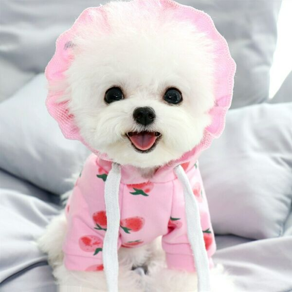 Pet Dog Clothes Cotton Puppy Pet Clothing for Dogs Hoodie Soft Dog Clothing $19.29