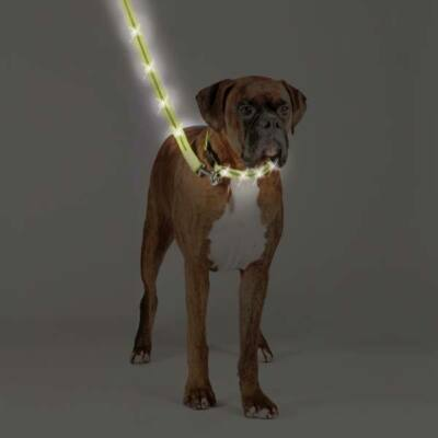 Zack & Zoey LED RECHARGEABLE Lighted Dog Pet Puppy Leash  Keep Your Dog Safe!