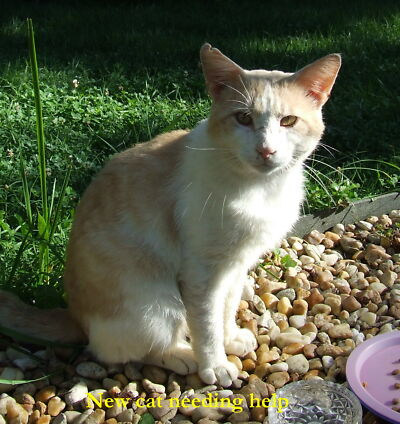 Cat PHOTO HELP CATS Kitty Rescue Shelter LITTER FOOD PLEASE LOOK!