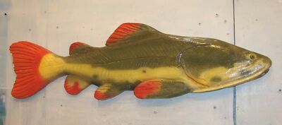 Chainsaw Carving Redtail Catfish Carved Cajaro Pirarara Gift Fishing Wall Art