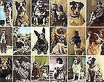 Postcard Dogs, Libby Hall, Good Book