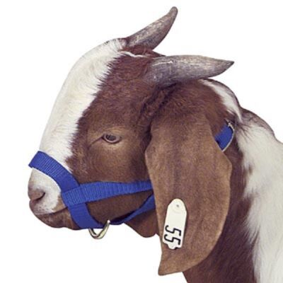 Poly Goat Halter - Choose your color and size NEW
