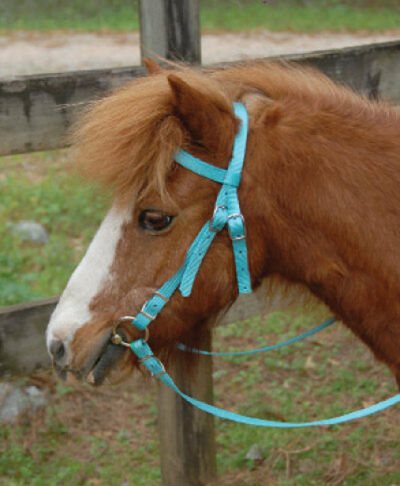 Miniature Horse Headstall w/Bit Reins Miniature Bridle - 4 Colors available NEW