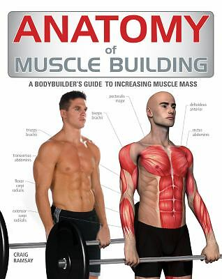Anatomy of Muscle Building: A Trainer's Guide to Increasing Muscle Mass  Ramsay