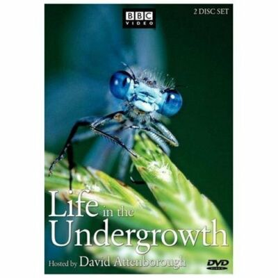 Life in the Undergrowth by
