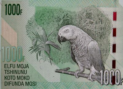AFRICAN GREY PARROT on MONEY 2013  CONGO 1000 FRANCS BANKNOTE Mint Uncirrculated