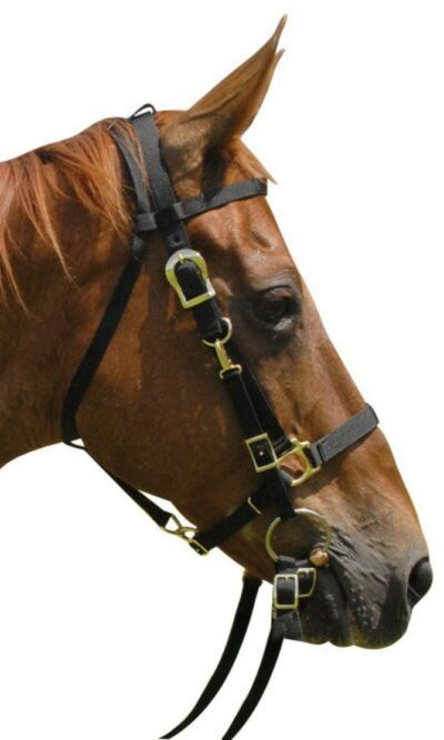 Bridle & Halter Combo with Reins 5 Colors NEW