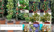 ALL 3 fruit TREES}Pear tree,Cherry tree & apple}stay small if potted-like dwarf~