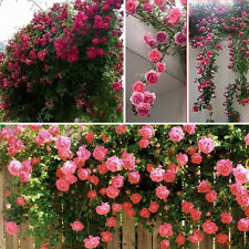 New 100pcs Rose red Climbing Rose Seeds Perennial Flower Garden Decor Home Plant