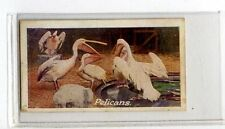 (Jb1751-100)  JACOBS,ZOO SERIES(GREEN),THE PELICAN,1924#14