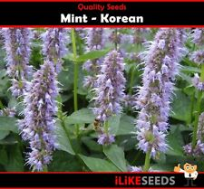 Mint Korean 50 Seeds Minimum Vegetable Garden Herb Plant Easy To Grow.