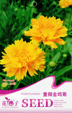 30 Original Package Seeds Double Coreopsis Seeds Coreopsis Lanceolata A046