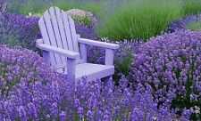 Lavender True Old English Heavenly Scent Cut or Dried 100 Seeds Free Ship!