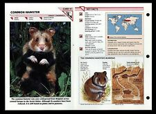 """COMMON HAMSTER"" WILD LIFE FACT FILE ANIMAL INFO-CARD/HOME SCHOOL STUDY"
