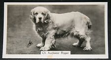 CLUMBER SPANIEL   Champion  Vintage Photo Card  VGC