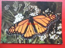 POSTCARD ANIMALS BUTTERFLY - MILKWEED OR MONARCH