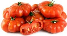 Organic Super Healthy Antioxidant-Rich Giant Italian Trumpet Bell Tomato 25 Seed