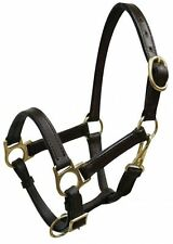 CLASS A MINI MINIATURE SIZE HORSE LEATHER TURNOUT HALTER HEAD COLLAR