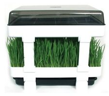 Lexen Healthy Sprouter The perfect sprouting kit for wheatgrass or other sprouts