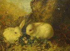 19th CENTURY INGLESE BIANCO CONIGLIETTI alimentazione Antico dipinto ad olio firmato