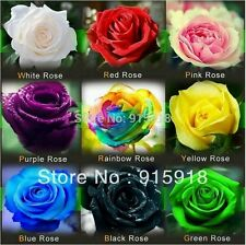 Rose Seeds - Flower Seeds - 9 Types - 100 Mix Seeds