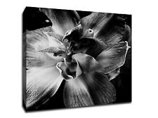 "Black and White Flower Wall Art - 20"" x 20"" Gallery Wrapped Canvas"