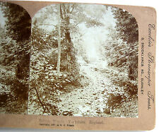 PHOTO STEREO EXCELSIOR 1897 CHEMIN DE FORET BOLTON YORKSHIRE ENGLAND ANGLETERRE