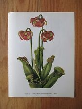 Set -12 Vintage Walcott Wildflower Prints - Mayapple, Pitcher-plant, etc. 4/1