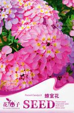 1 Pack 50 Rocket BIANCA SEMI di IBERIS Amara fiori da giardino a138