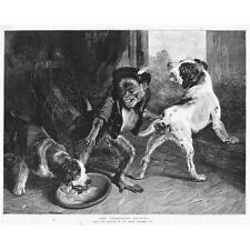 EDWIN LANDSEER The Intruding Puppies - Antique Print 1891