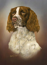 Limited Edition English Springer Spaniel Print by Robert J. May