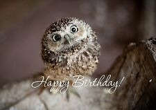 Owl Personalised Printed Birthday Cards Cute Animals Baby Chick