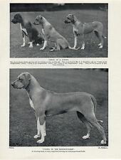 RHODESIAN RIDGEBACK NAMED DOGS OLD 1934 DOG PRINT