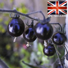 Rare Purple cherry Tomato Seeds - 10 Fresh Viable Seeds - UK Seller