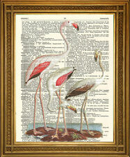 "ANTIQUE DICTIONARY PAGE PRINT: Vintage Pink Flamingoes Bird Art (8 x 10"")"