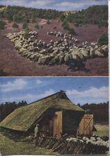Alte Postkarte - Schafstall und Heidschnucken in der Lüneburger Heide