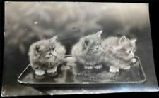 OLD POSTCARD OF CATS / KITTENS - USED 1953