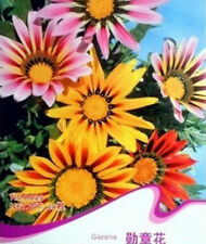 FD1536 Gorgeous Gazania Seed Mix Colorful Medal Of Flowers Beautiful ~50 Seeds~