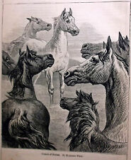Antique Herd of Horses Wood Engraving by Harrison Weir, Ready to Frame
