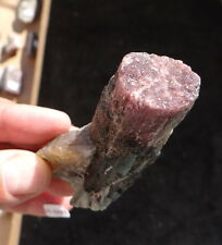 Watermelon Tourmaline, Partial Lepidolite Pseudomorph, Transformation, 14-4253
