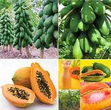 Nuevos Al Aire Libre Casa Jardín Maradol Papaya vegetales de árboles frutales, plantas Semillas 8pcs F