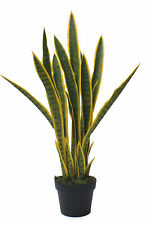 3ft Sansevieria Plant - Mother In Laws Tongue