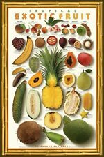 FRUIT POSTER ~ TROPICAL EXOTIC 24x36 Food Cook Kitchen Norman Van Aken Coconut