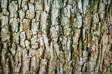 Tree Bark Camo Hydrographic Film With Free Samples
