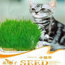 FD1063 Cat Grass Seed For Your Cat Food Pet Food Pet Grass Seed 1 Bag 200 Seeds~