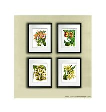 Set of 4 Yellow Orchid Prints Antique Botanical Book Plate Tropical wall decor