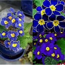 200Pcs Graines De Bleu L'onagre Semer Fleur Plante Jardin Maison Flower Seeds