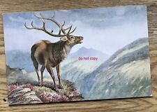 George Rankin artist signed postcard - wild animals wildlife wapiti deer