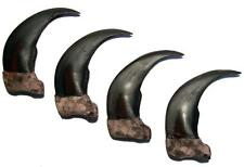 4 Lg 3 In Sythentic Grizzly Bear Claw brown bears black wild animal claws resin