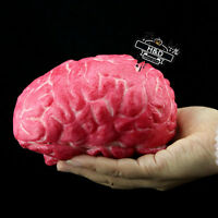 Gory Bloody Fake Brain Brains Horror Prank Halloween Prop Decoration Home Party